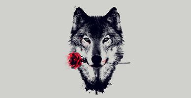 זוגיות עם זאב בודד